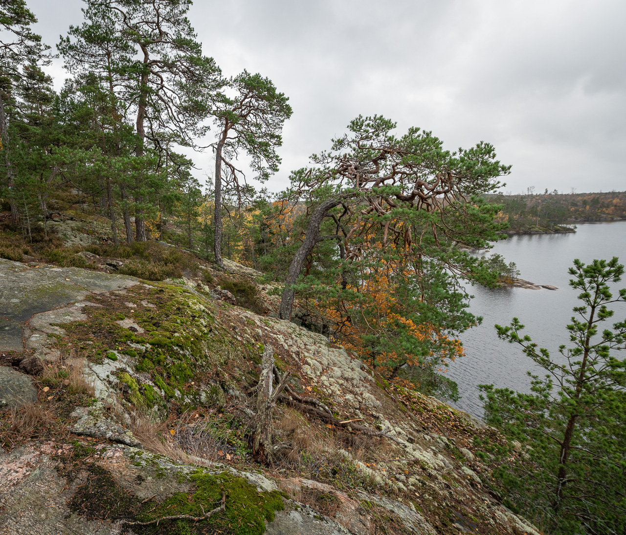 Tyresta Nationalpark Foto: Christer Blum